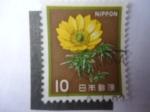 Sellos de America - Japón -  Adonis (Adonis Amurensis) Planta Medicinal de las Regiones Alpinas.