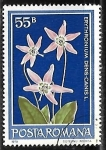 sellos de Europa - Rumania -  Dog's Tooth Violet