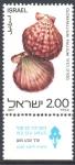 Stamps : Asia : Israel :  CONCHAS  MARINAS.  GLORIPALLIUM  PALLIUM.