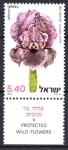 Stamps : Asia : Israel :  PROTECCIÓN  DE  FLORES  SILVESTRES.  IRIS  HAYNEI.