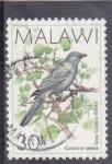 Sellos del Mundo : Africa : Malawi : AVE- CORACINA CAESIA