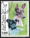 Sellos del Mundo : Africa : Somalia : American Hairless Terrier and Nippon Terrier