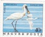 Stamps Hungary -  AVES- platalea leucorodia