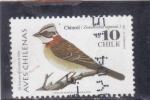 Stamps : America : Chile :  AVE- CHINCOL