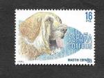 de Europa - España -  Perro de Raza Española