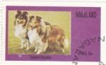 Stamps Nagaland -  Perros de raza- shetland sheepdogs