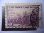 Sellos de America - Argentina -  Plantación de Caña de Azúcar.