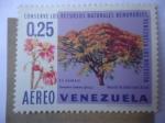 sellos de America - Venezuela -  El Saman (Samanea Saman) Merrill Mimosaceae - Conserve los Recursos Naturales Renovables.