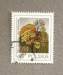 Sellos de Europa - Polonia -  Arce