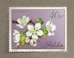 Stamps Poland -  Flores de Pyrus