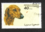Stamps Morocco -  Perros