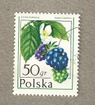 Stamps Poland -  Grosella