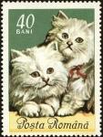 Sellos de Europa - Rumania -  Gatos domésticos