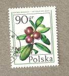 Sellos de Europa - Polonia -  Vaccinium vitis
