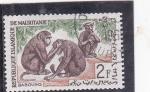 Stamps : Africa : Mauritania :  MONOS BABUINOS