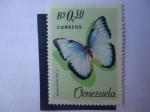 Stamps : America : Venezuela :  Mariposa Emperador (Morpho peleides, Koll. o)