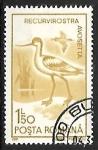 Sellos de Europa - Rumania -  Recurvirostra avosetta