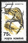 Stamps Romania -  Genetta genetta