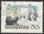 Stamps of the world : Hungary :  1191 - Perro húngaro
