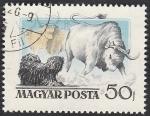 de Europa - Hungría -  1191 - Perro húngaro