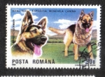 Stamps Europe - Romania -  Perros