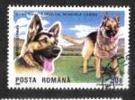 de Europa - Rumania -  Perros