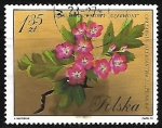 Stamps : Europe : Poland :  Crataegus oxycantha