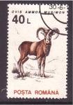 Stamps Romania -  serie- Fauna local