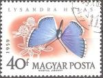 Sellos del Mundo : Europa : Hungría : Mariposas-Adonis Blue (Lysandra hylas).