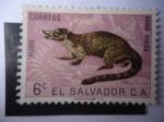 Sellos de America - El Salvador -  Coati de Nariz Blanca (Nasua Narica)