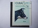 Sellos del Mundo : America : Cuba : Holstein (Bos primigenius taurus) Razas Bovinas.