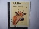 Sellos del Mundo : America : Cuba : Jersey - Razas Bovinas.
