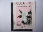 Sellos del Mundo : America : Cuba : Cebú Brahman (Bos Primigenius indicus) - Razas Bovinas.