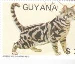Sellos del Mundo : America : Guyana : GATO AMERICAN SHORTHAIRED