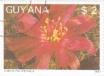 Sellos del Mundo : America : Guyana : FLORES- LOBIVIA POLYCEPHALA