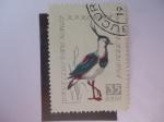 Stamps Romania -  Avefria del Norte (Vanellus vanellus) Aves Cantoras.
