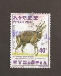 de Africa - Etiopía -  tragelaphus sriptus