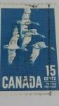 Stamps America - Canada -  Branta Canadienses