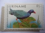 Sellos de America - Surinam -  Gallinule púrpura Americana (Gallinule martinica) - Gallineta americana.