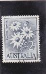 Sellos de Oceania - Australia -  FLORES- FLANNEL