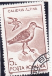 Stamps : Europe : Romania :  AVE-CALIDRIS ALPINA