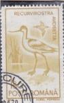 Stamps Romania -  AVE-RECURVIROSTRA AVOSETTA