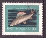 Stamps Poland -  serie- Peces