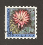 Stamps Poland -  Flor Coryphanta vivipara