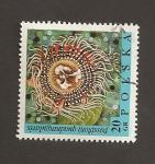 Sellos de Europa - Polonia -  Flor Passiflora quadragularis