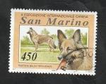 Sellos de Europa - San Marino -  1353 - Perro Pastor belga
