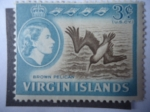 Stamps America - Virgin Islands -  Brown Pelican (Peleanus occidentalis) - Pelicano Frente