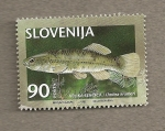 Stamps Europe - Slovenia -  Pez Umbra krameri