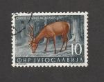 Stamps Yugoslavia -  Ciervo