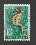 de Europa - Yugoslavia -  Caballito de mar